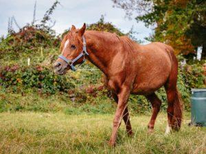 Pferde Miiza